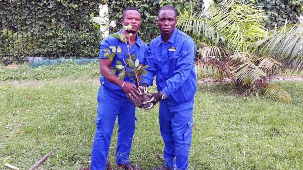 Le personnel de l'Alima Palace lutte contre la déforestation